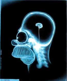 El 10% de nuesto cerebro